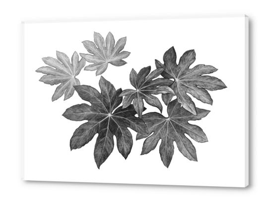 Leaves Acrylic prints by Nika_Akin