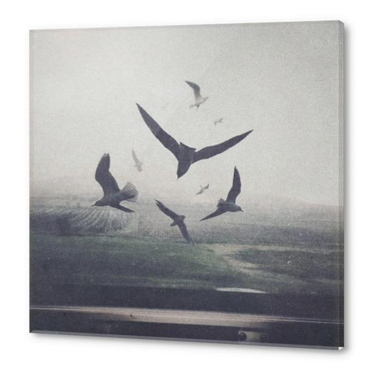 Birds Acrylic prints by yurishwedoff