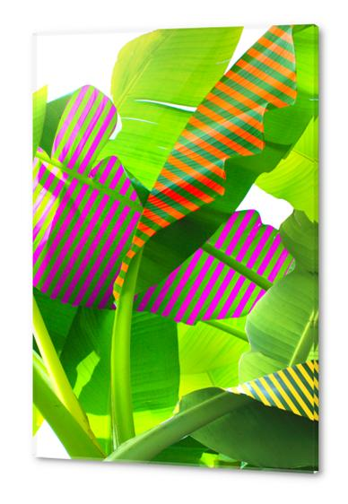 Banana stripes Acrylic prints by fokafoka