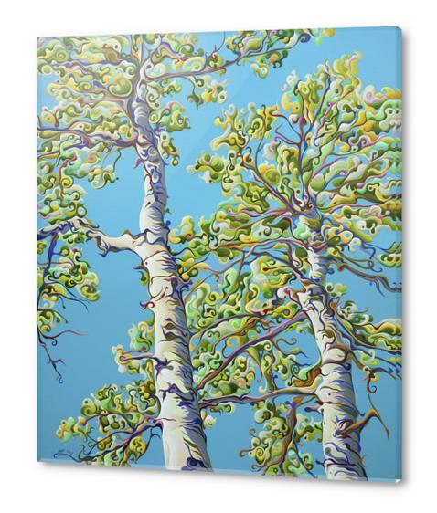 Blossoming CreativiTree Acrylic prints by Amy Ferrari Art
