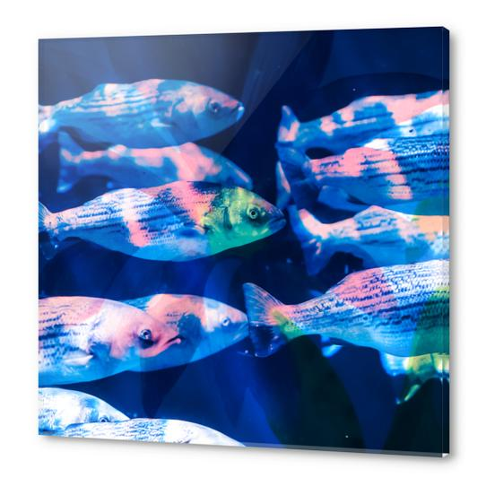 Colorful fish Acrylic prints by mmartabc