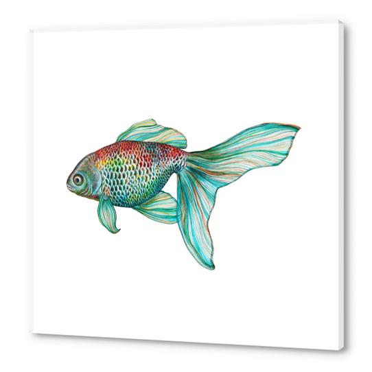 Fish Acrylic prints by Nika_Akin