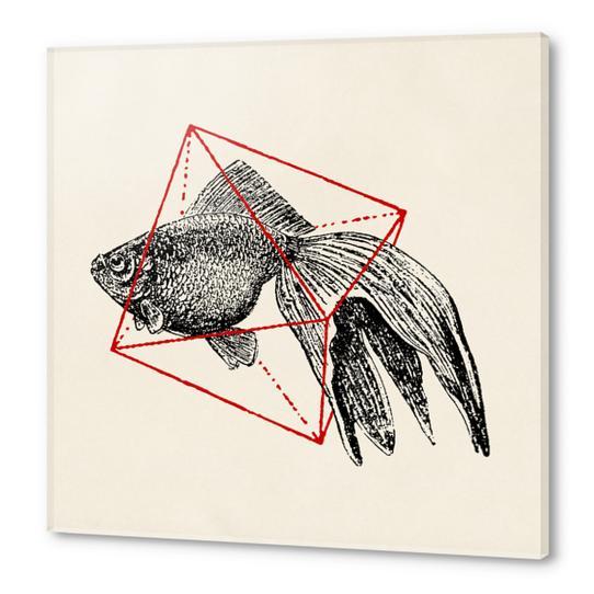 Fish In Geometrics III Acrylic prints by Florent Bodart - Speakerine