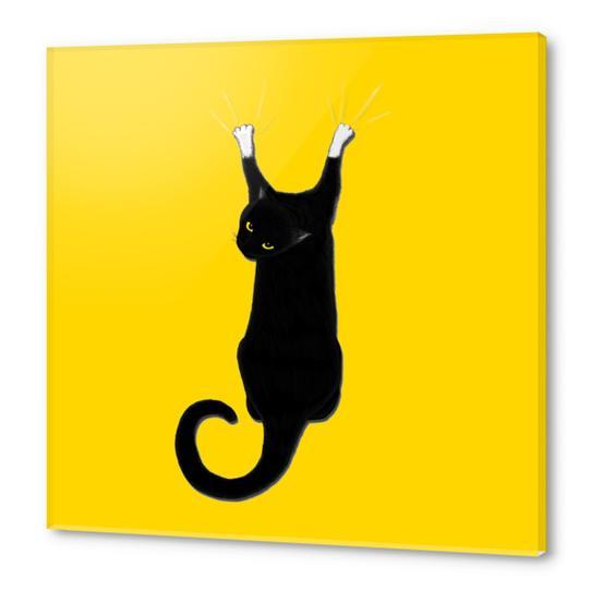 Hang Cat Acrylic prints by Tummeow