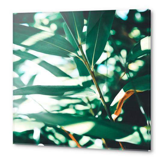Love leaf Acrylic prints by mmartabc