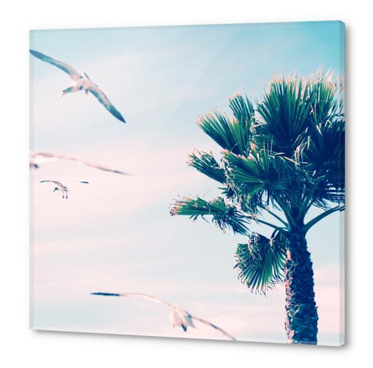 Palm Tree Acrylic prints by mmartabc