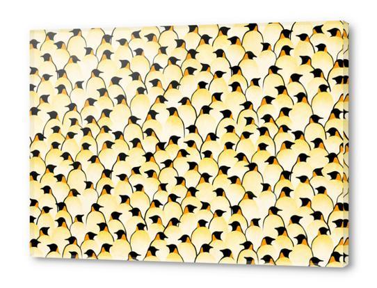 Penguins Acrylic prints by Florent Bodart - Speakerine