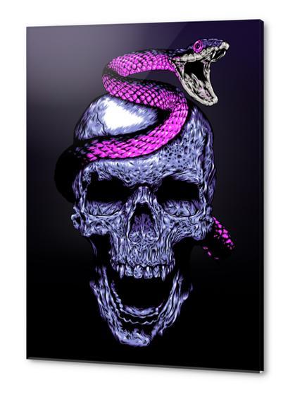 Skull and Snake Acrylic prints by Jordygraph