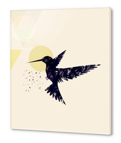 Bird X Acrylic prints by Amir Faysal