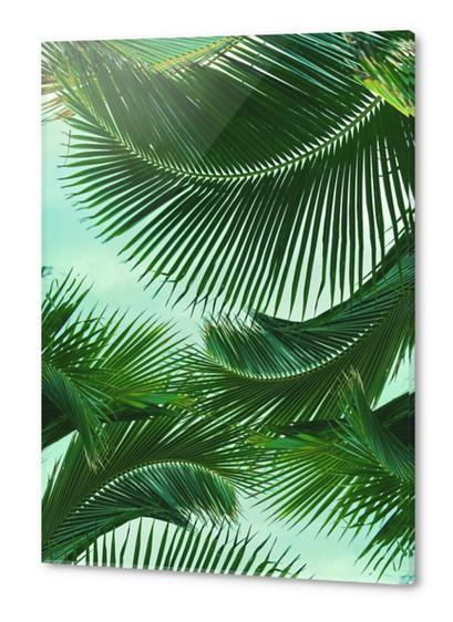 ARECALES Acrylic prints by Chrisb Marquez