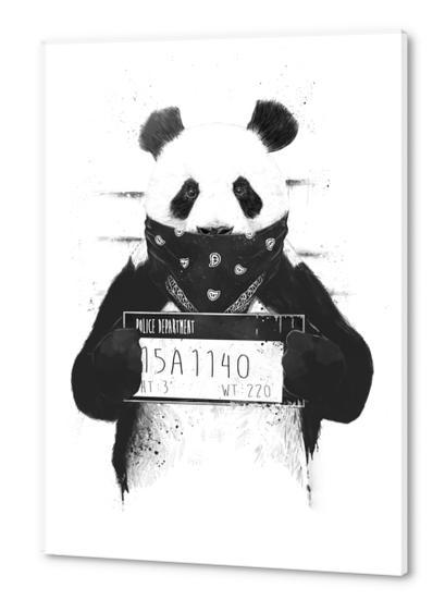 Bad panda Acrylic prints by Balazs Solti