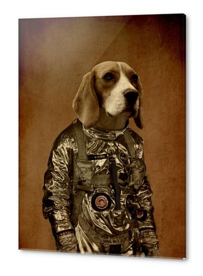 Beagle Acrylic prints by durro art