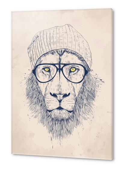 Cool lion Acrylic prints by Balazs Solti