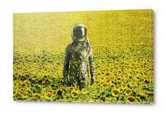 Stranded in the sunflower field Acrylic prints by Seamless
