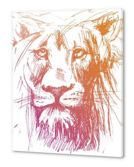 Lion Acrylic prints by Georgio Fabrello