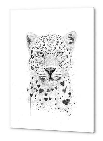 Lovely leopard Acrylic prints by Balazs Solti