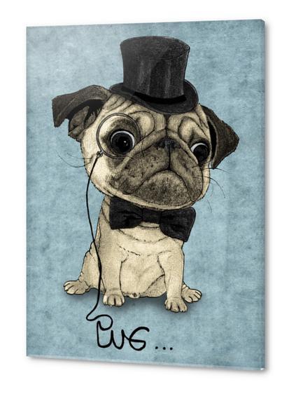 Pug; Gentle Pug Acrylic prints by Barruf