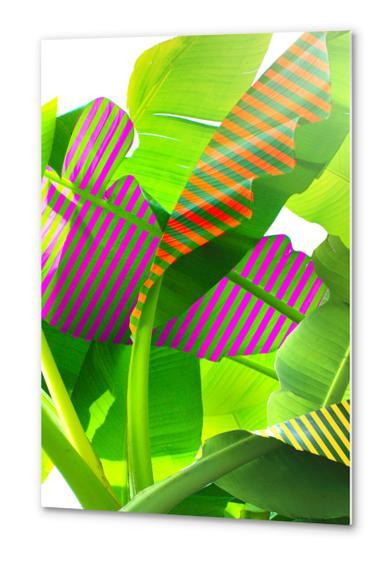 Banana stripes Metal prints by fokafoka