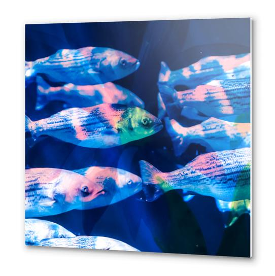 Colorful fish Metal prints by mmartabc