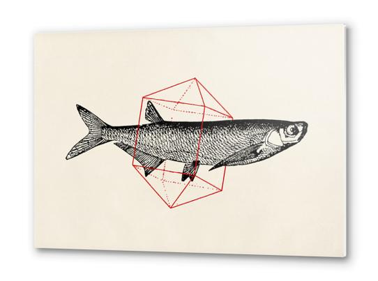 Fish In Geometrics II Metal prints by Florent Bodart - Speakerine