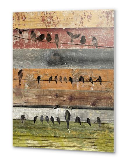 Bird composition II. Metal prints by Irena Orlov