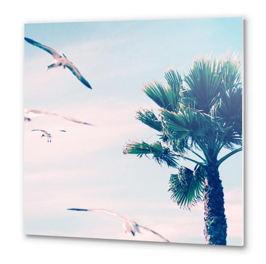 Palm Tree Metal prints by mmartabc