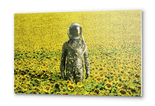Stranded in the sunflower field Metal prints by Seamless