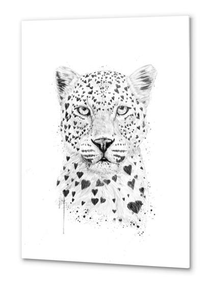 Lovely leopard Metal prints by Balazs Solti