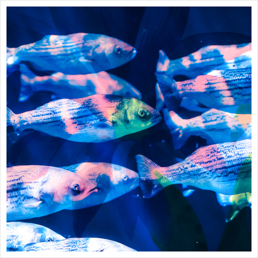 Colorful fish Art Print by mmartabc
