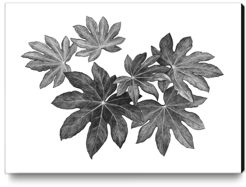 Leaves Canvas Print by Nika_Akin