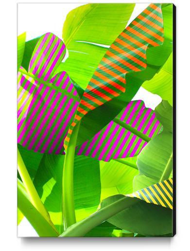 Banana stripes Canvas Print by fokafoka