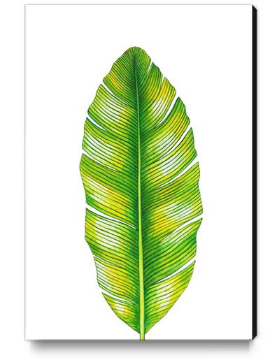 Banana Leaf Canvas Print by Nika_Akin