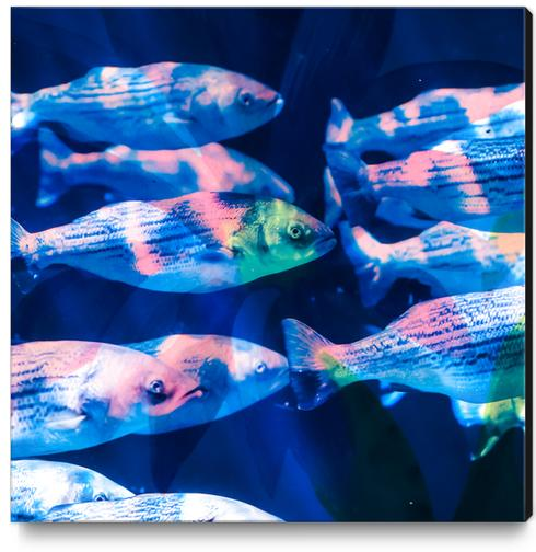Colorful fish Canvas Print by mmartabc