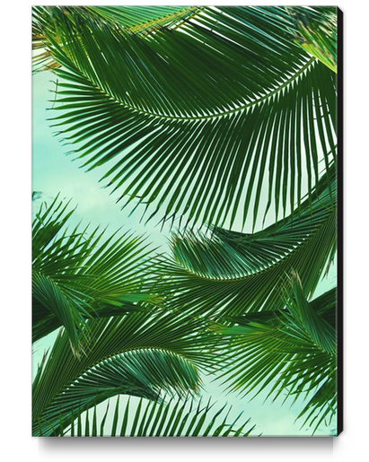 ARECALES Canvas Print by Chrisb Marquez