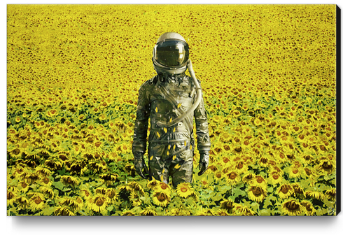 Stranded in the sunflower field Canvas Print by Seamless
