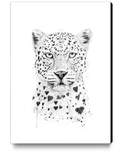 Lovely leopard Canvas Print by Balazs Solti