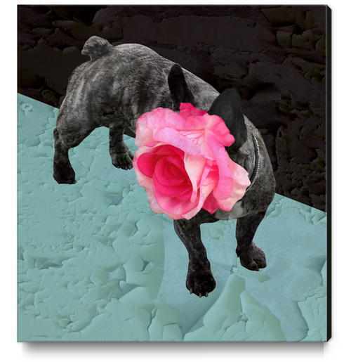 Romantic French Bulldog Canvas Print by Ivailo K