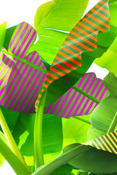 Banana stripes by fokafoka