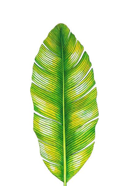 Banana Leaf by Nika_Akin