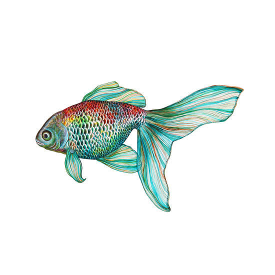 Fish by Nika_Akin