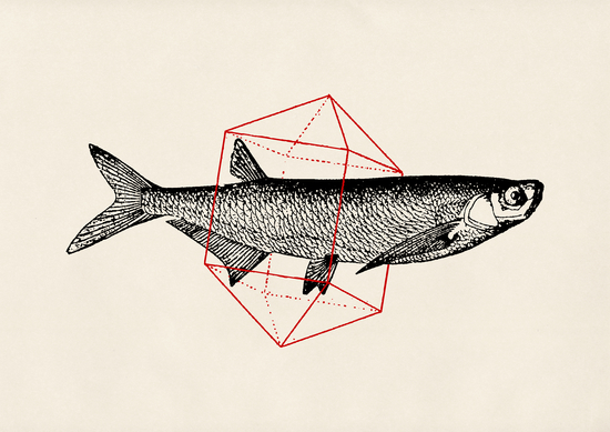 Fish In Geometrics II by Florent Bodart - Speakerine