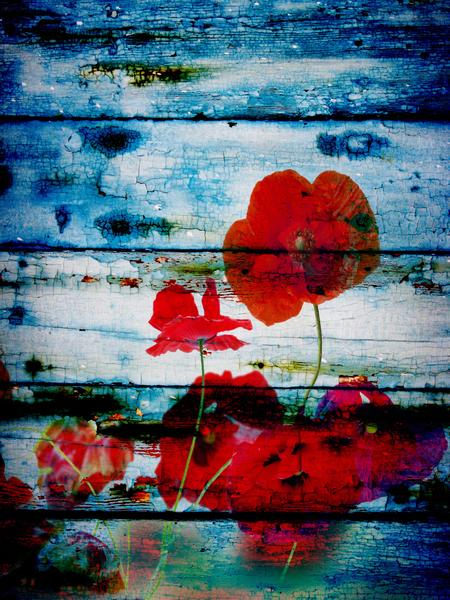 Poppies on Blue by Irena Orlov