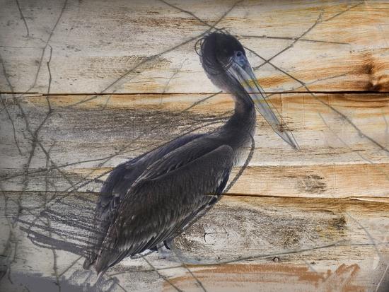 Pelican by Irena Orlov