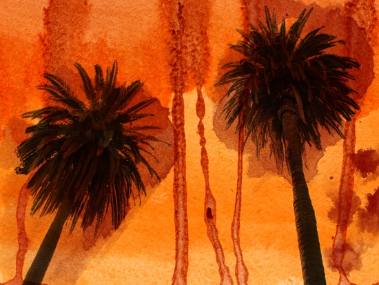 Sunset Palms by Irena Orlov