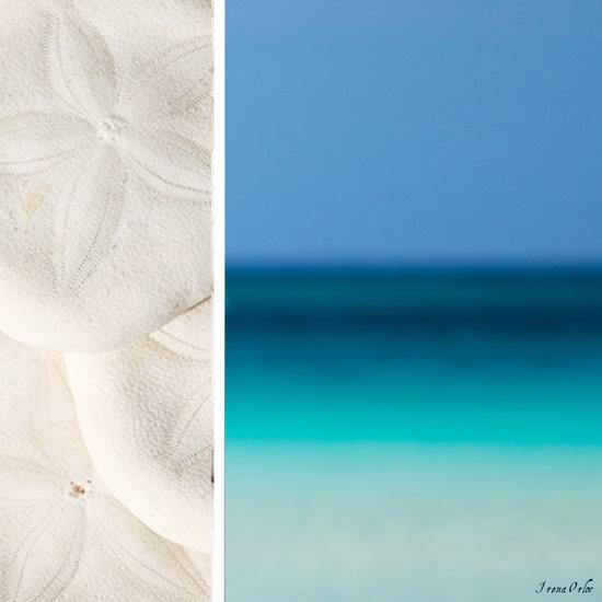 Coastal by Irena Orlov