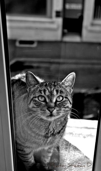 Le chat sur la fenêtre by Stefan D