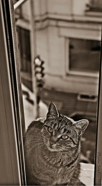 Le chat sur la fenêtre (3) by Stefan D