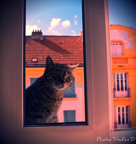 Le chat sur la fenêtre(2) by Stefan D