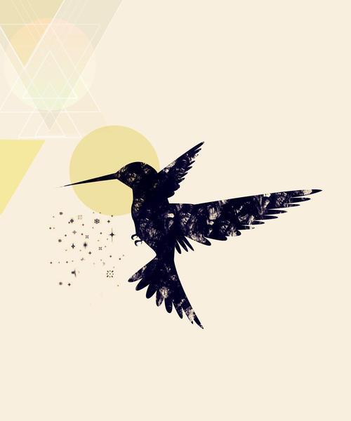 Bird X by Amir Faysal