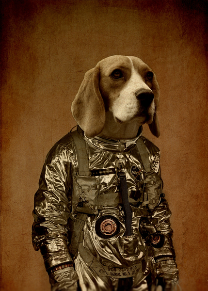 Beagle by durro art